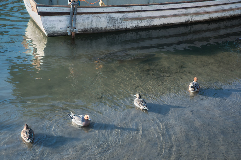 Four ducks, two fish, one boat