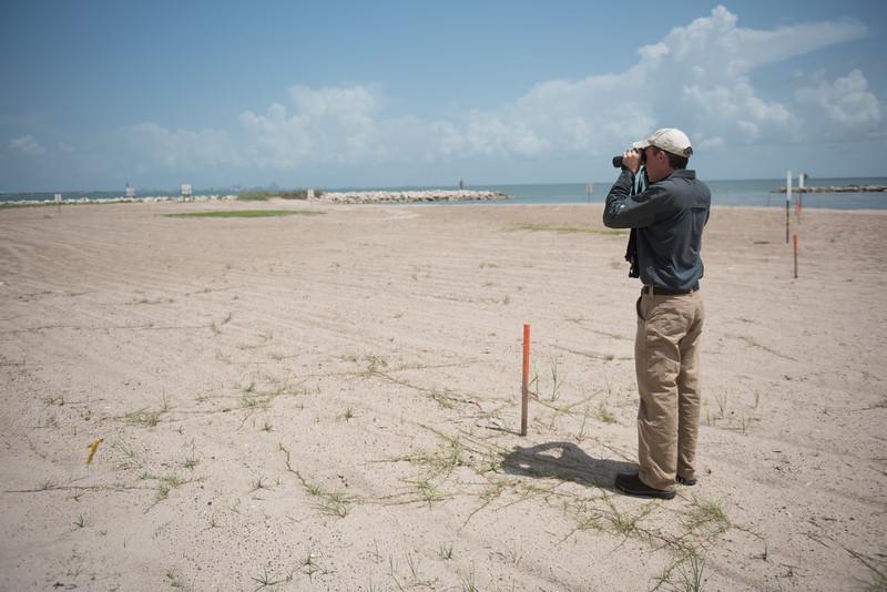 David Newstead looks for nests on the University Beach. David is the bird program director for the Coastal Bend Bays & Estuaries Program.