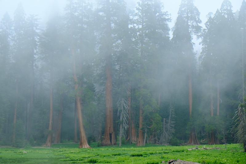 California Day 6 Sequoia 05-30-2017 97.JPG