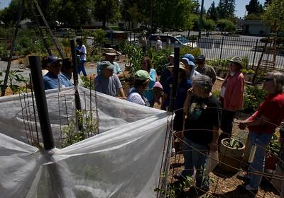 Charles Street Garden - Deva Luna's Gardening Class Visit