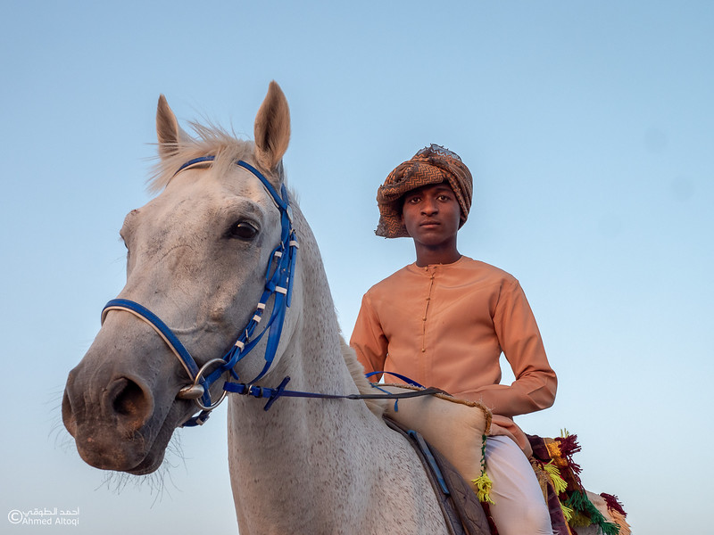 Horse - Ibra 2.jpg
