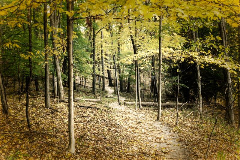 Filtered - Autumn Walk