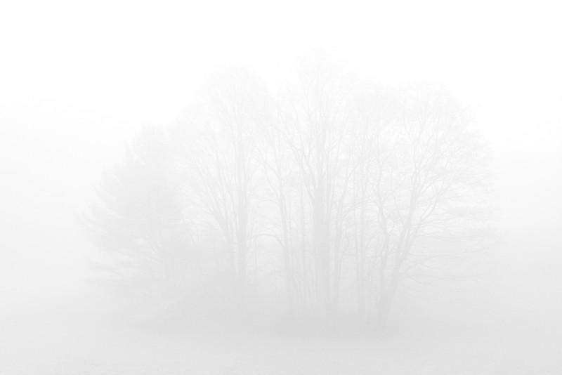 TreeClouds.jpg