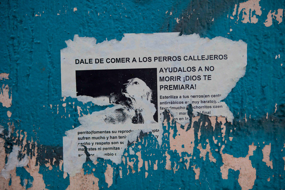 Description of . A poster with an image of a dog reads in Spanish;