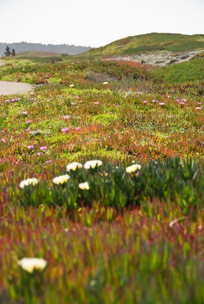 Colorful flowers on the beach