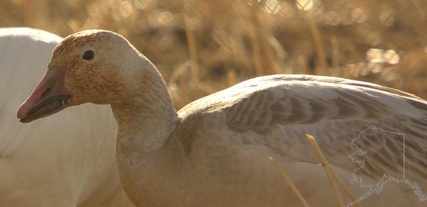 Bird Migration 2011