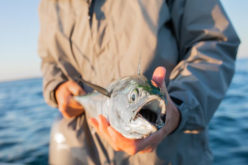 capecodfalsealbacorefishing.bencarmichael (8 of 13).jpg
