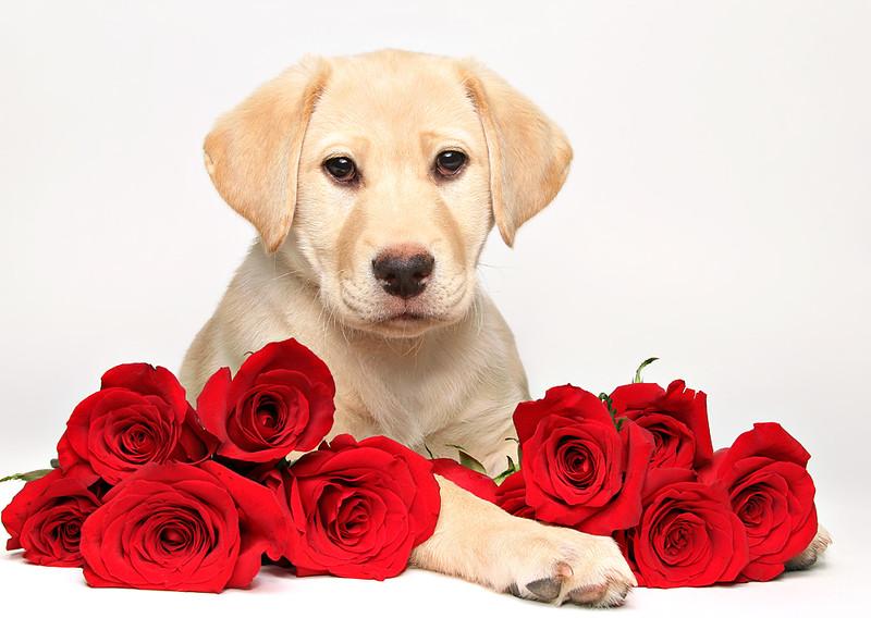 Valentine Puppppy.jpg