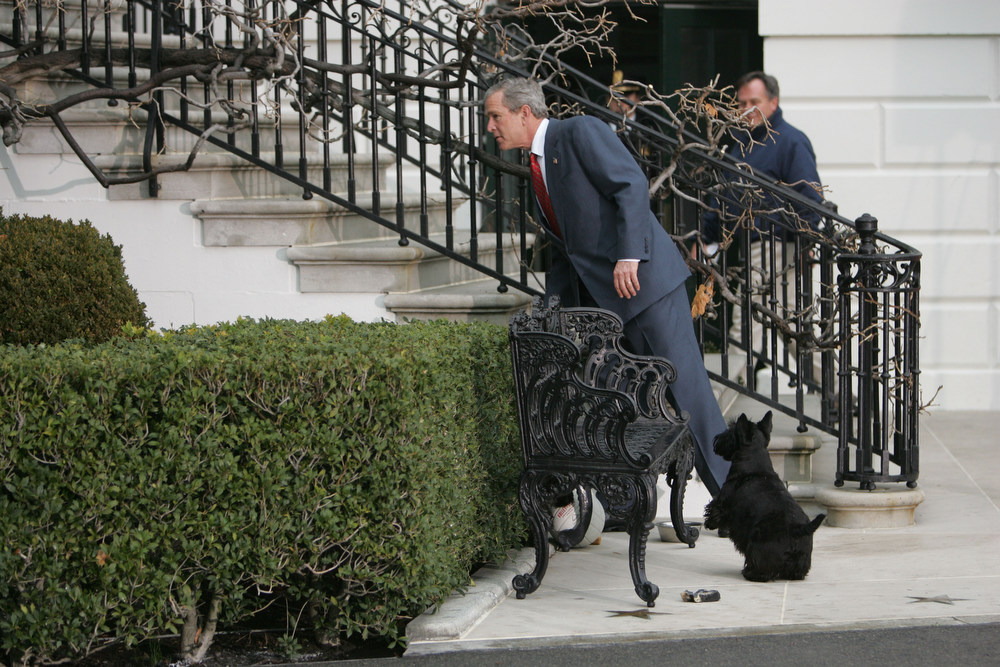 . President Bush and his dog Barney search for their new puppy, Miss Beazley, a Scottish terrier, Thursday, Jan. 6, 2005, on the South Lawn of the White House. The puppy, a birthday gift to the first lady from President Bush, ran into the bushes during a photo opportunity to show off the new puppy.   (AP Photo/Ron Edmonds)