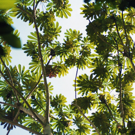 Amazon Rainforest Study Site of the World Wildlife Fund