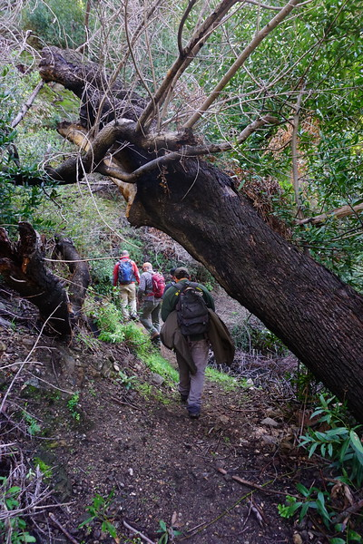 20160218104-Gabrielino Trail Scouting.JPG