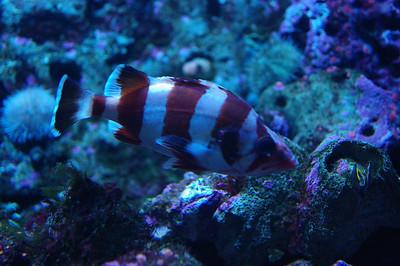 Birch Aquarium & Cabrillo Monument - 3/6/10