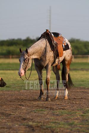 Zac Schoolcraft Show Horses