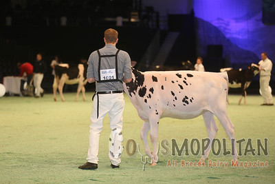 Swiss Expo Holstein Hfrs 2016