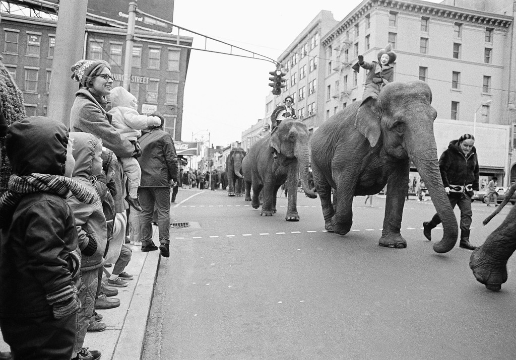 . Despite cold temperatures and a chill wind, several hundred people turned out to watch the elephants and horses parade through the center of New Haven, Nov. 15, 1972. The animals are part of the Ringling Bros., Barnum and Bailey Circus which opens in New Haven on Wednesday. (AP Photo/Bob Child)