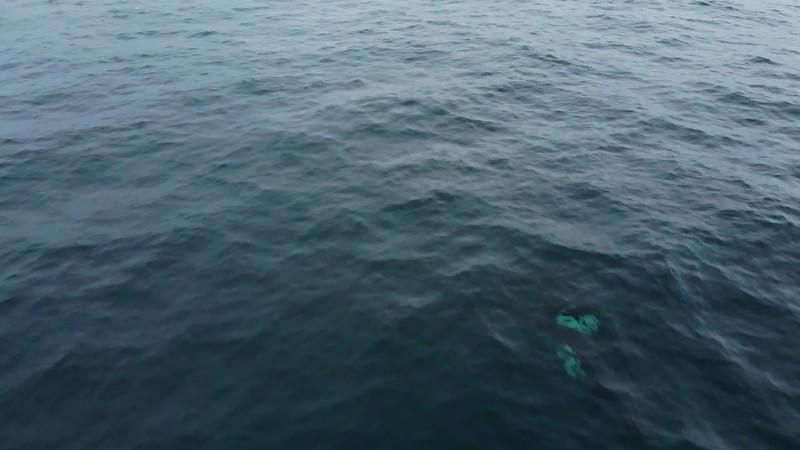 orca_2.mp4