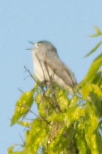 Bird Walk-08943.jpg
