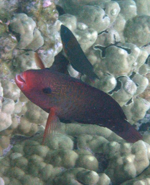 525- 20080416- Hawaii 20-Snorkelling IMG_0787.jpg