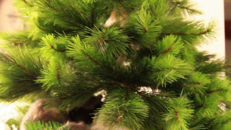 Christmas Day 2012-7093.mp4
