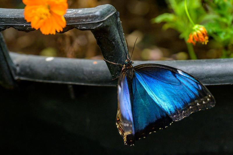 Middleton Butterflies-3220.jpg