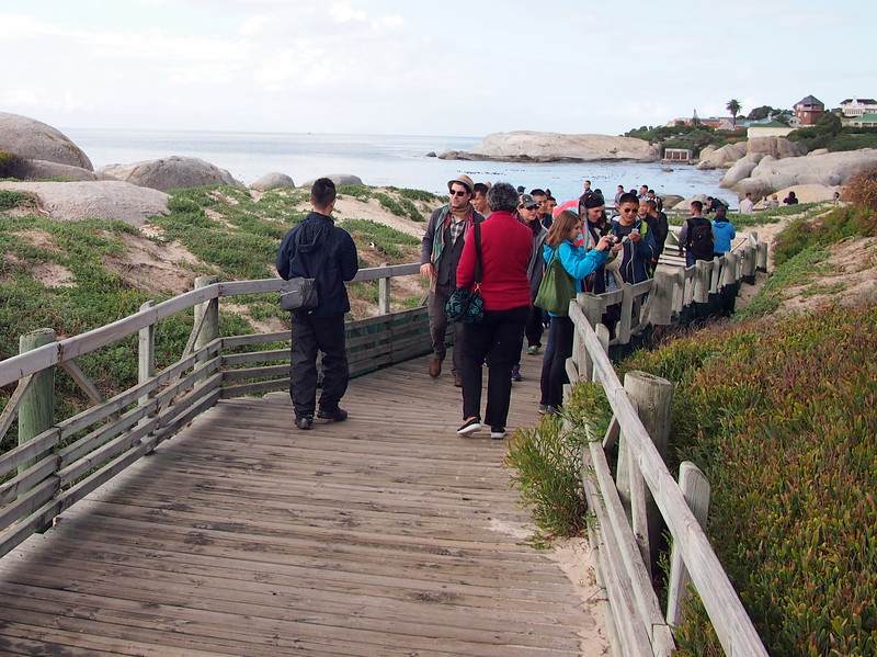 P5197289-penguin-viewing-walkway.JPG