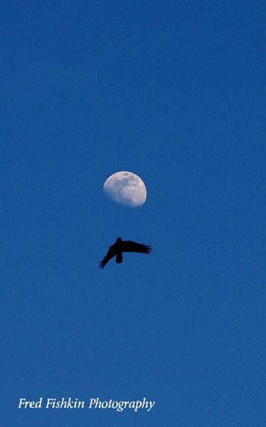 bird moon.jpg
