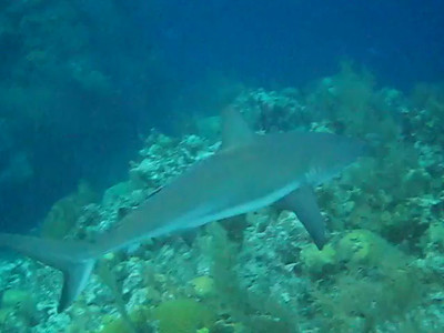 Belize Dive Trip Videos