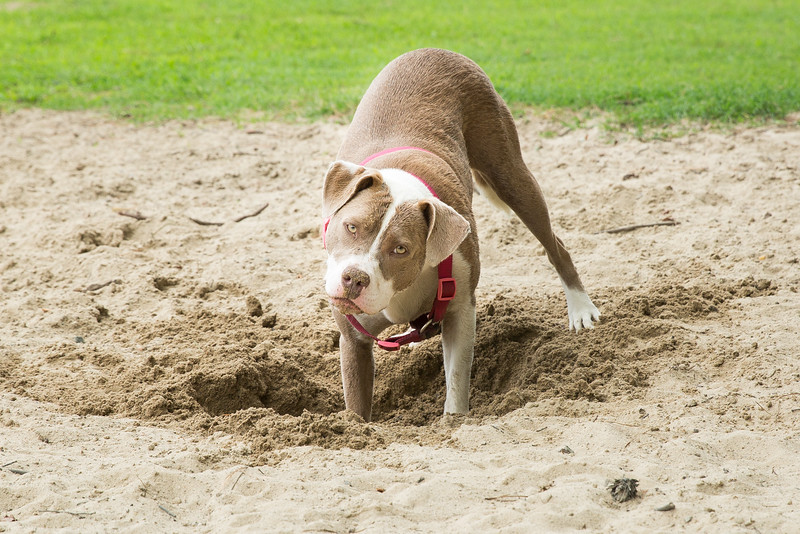 Smithfield dog Park 6-25-2016 (145).jpg