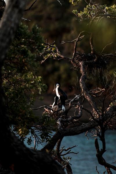 goat-island-063.jpg