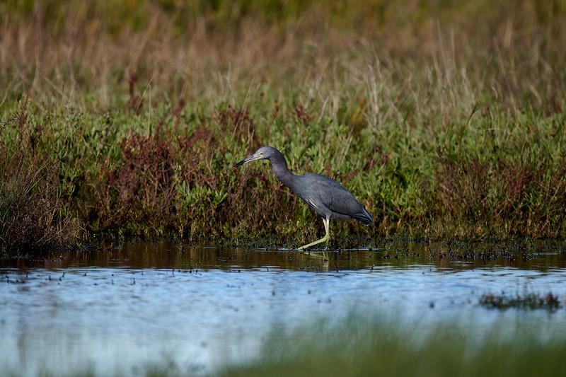 20181103 - Brazoria Wildlife Refuge-85B_4035.jpg