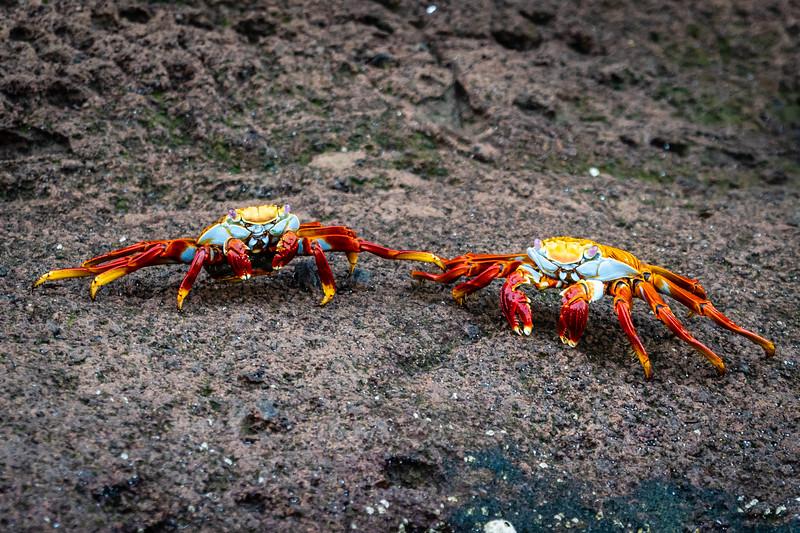 Galapagos-3773.jpg