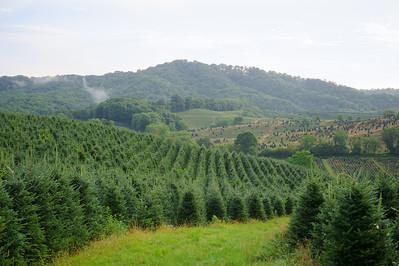 Hart-t-tree farms
