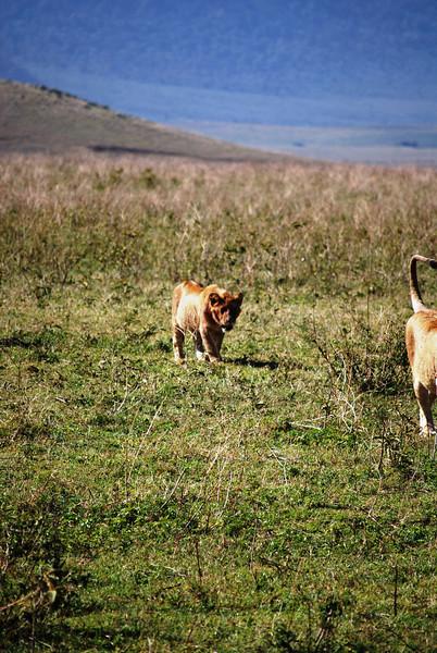 Ngorongoro (64).JPG