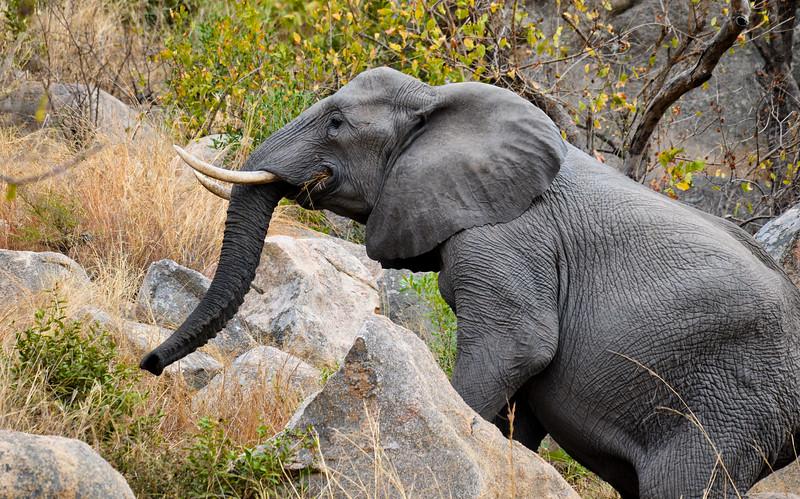Elephants_Kruger-7.jpg