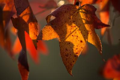autunno (10/14)