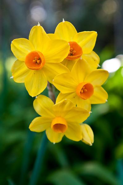 Some pretty flowers near the Dafodil area.