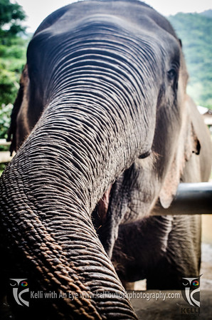 Elephant Nature Park 1Day Tour