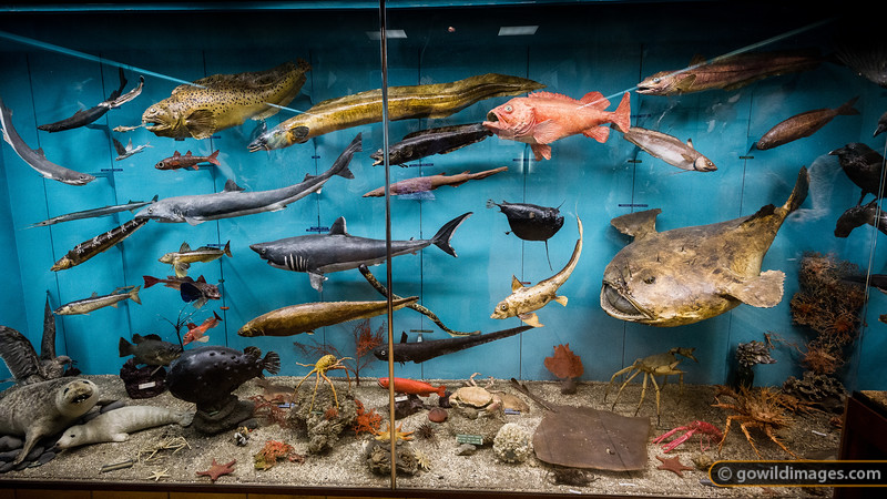 Marine life display, Sæheimar aquarium, Heimæy, Vestmannæyjar [editorial use only]