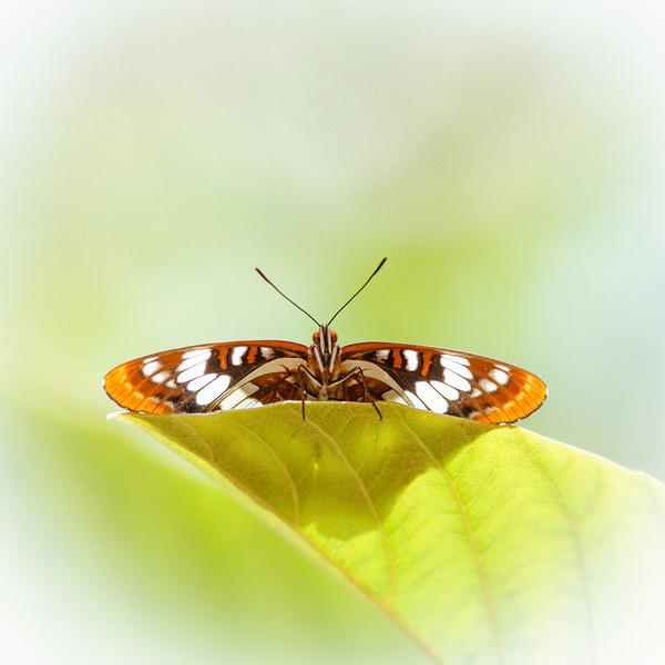 Butterfly_20130601_022.jpg