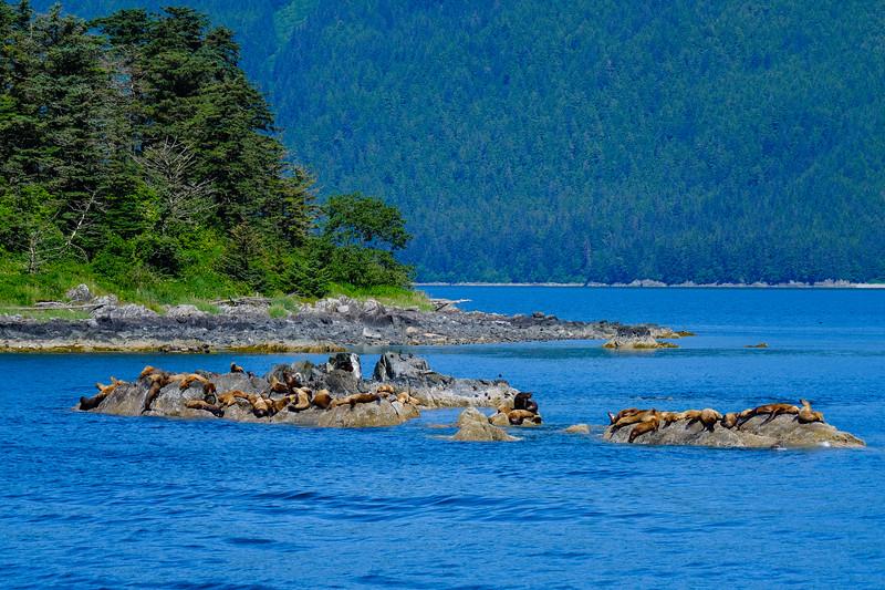 Alaska Cruise-9148.jpg