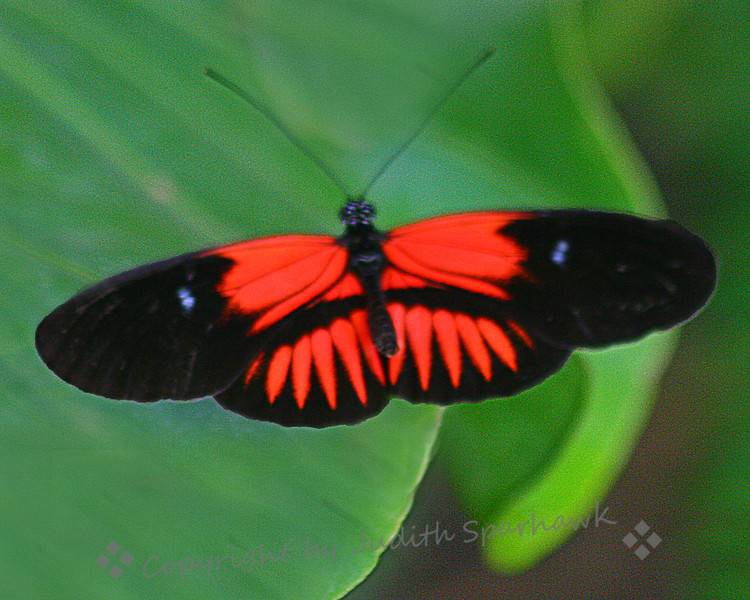 Orange & Black Beauty.jpg