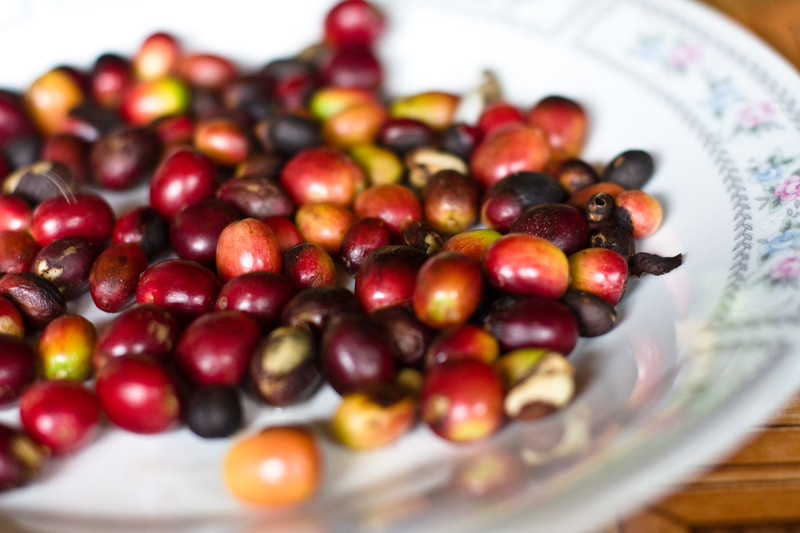 raw-coffee-beans_4809363984_o.jpg