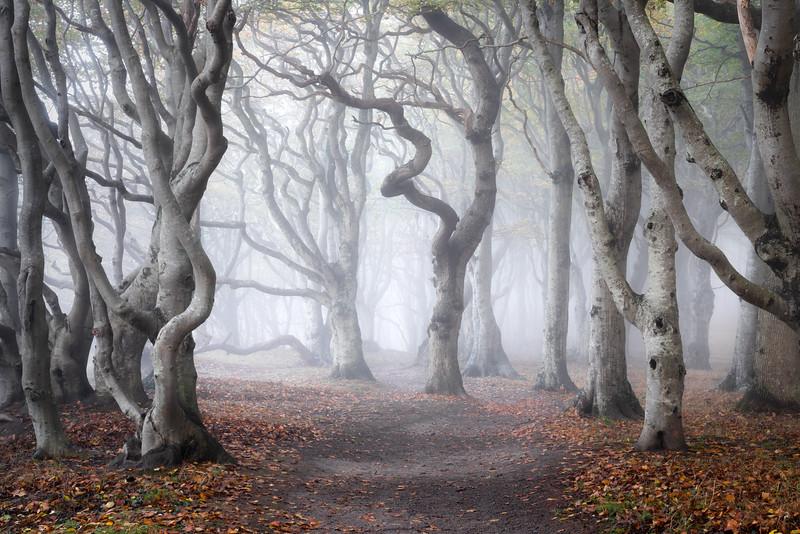 Kalø Skov Woodland photography fog landscape spooky forest 2.jpg
