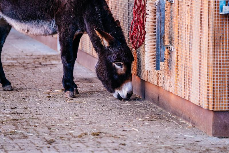 Tonis Zoo-0587.jpg