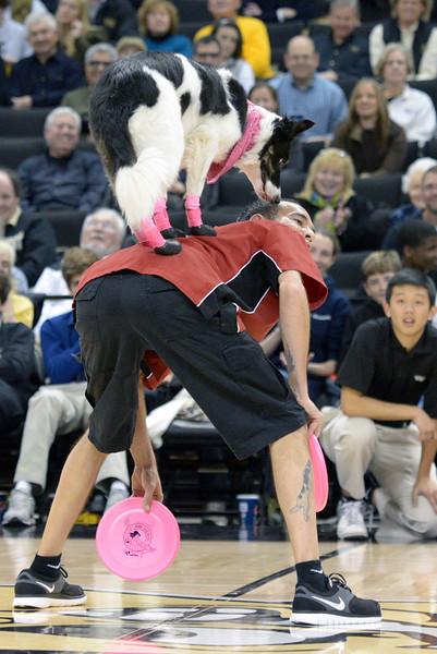 Frisbee dogs 18.jpg