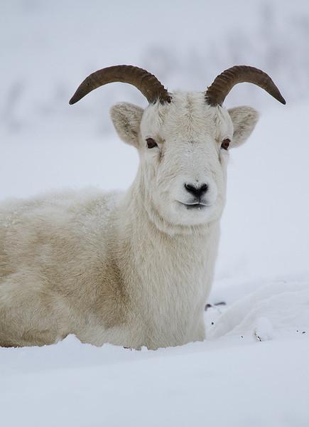 Arctic Wildlife and Landscapes Photo Workshop-5.jpg
