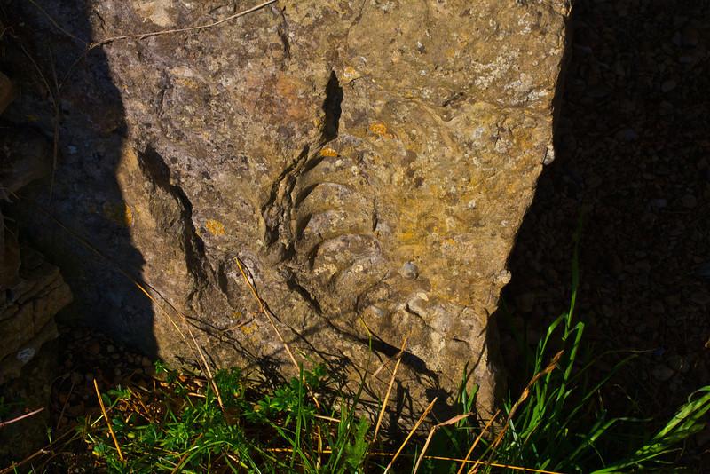 The ammonite at Stoney Littleton