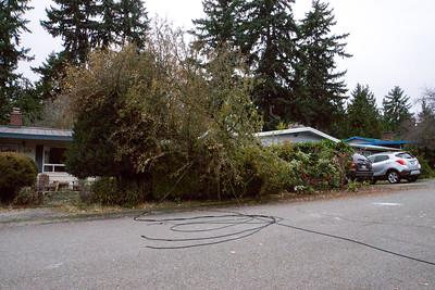 Tree Down 11/13/17