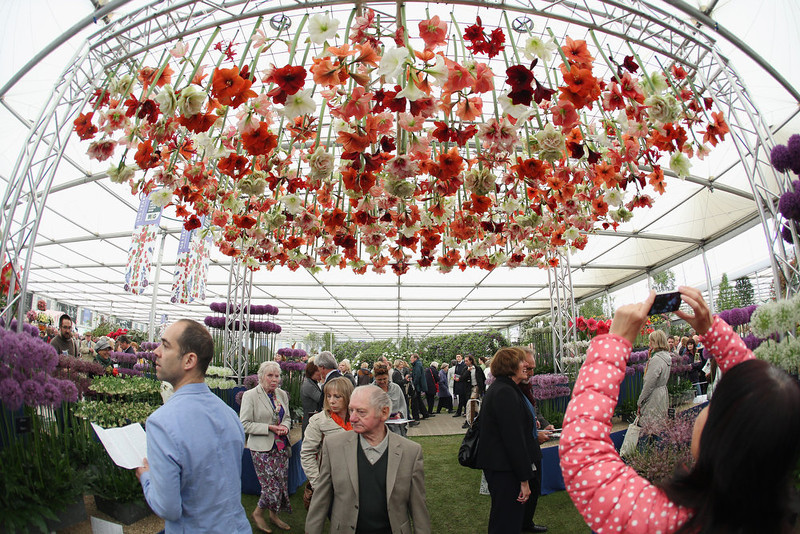 . Visitors admire the azaleas on display in The Great Pavilion at the RHS Chelsea Flower Show on May 21, 2013 in London, England. The Chelsea Flower Show run by the RHS celebrates its 100th birthday this year.  (Photo by Oli Scarff/Getty Images)