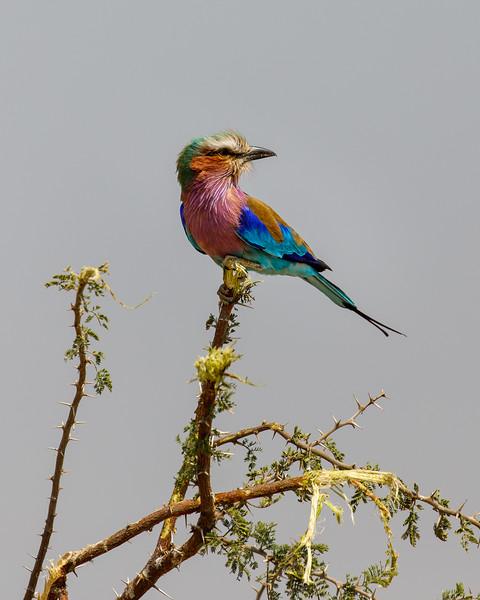 Botswana_0818_PSokol-290.jpg